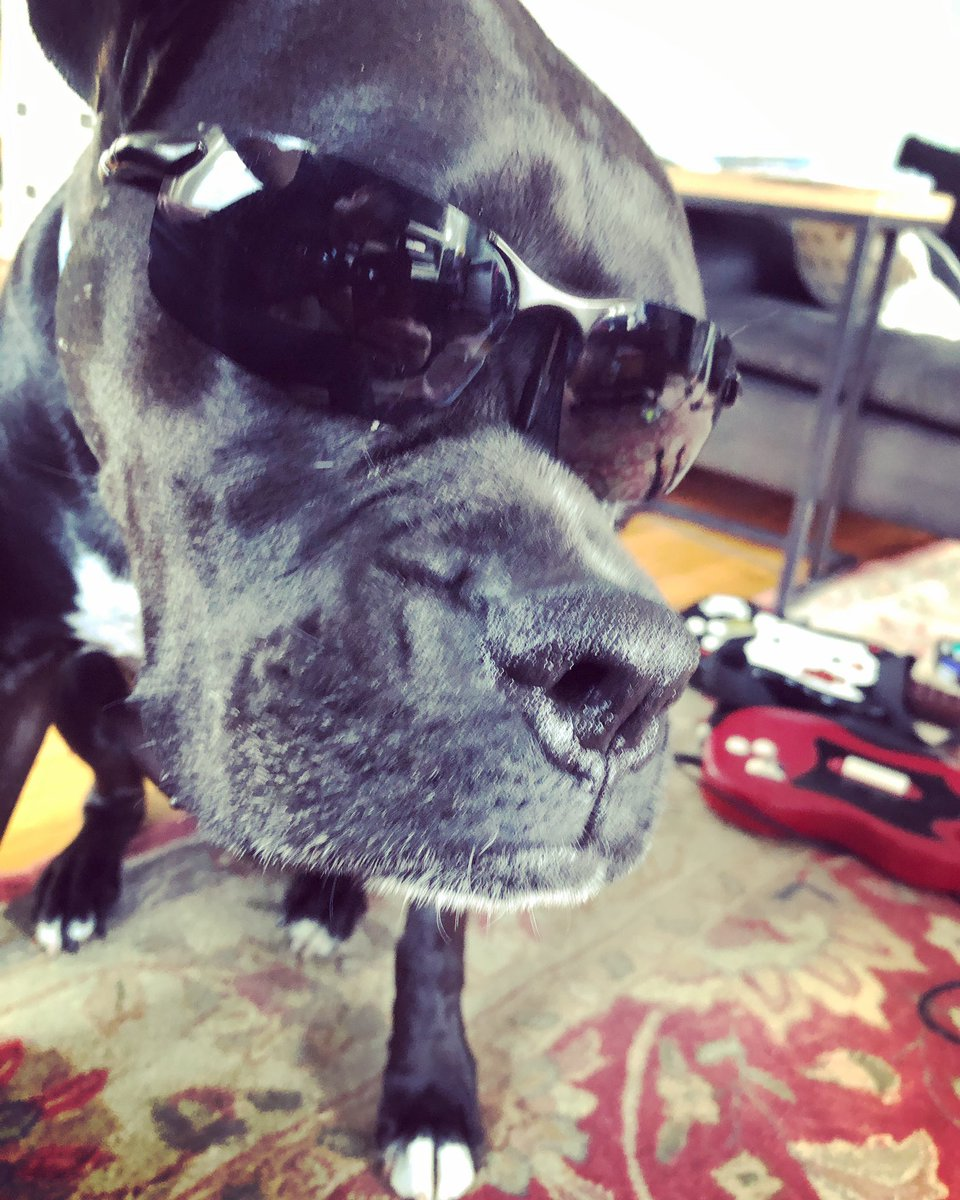 What? It's sunny!... You got a problem with that? #dog #sunny #funnydog #family