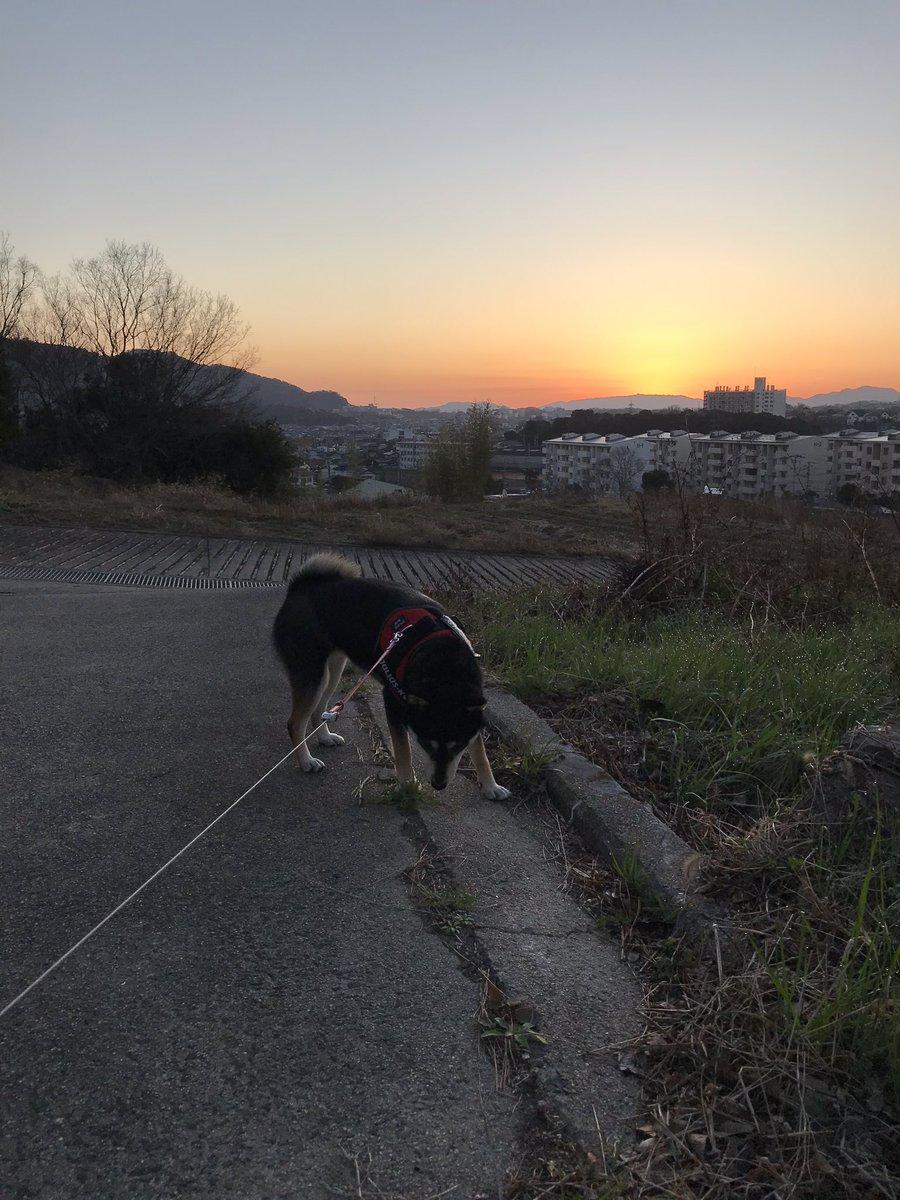 RT @azuki20180125: 今日も快晴の予感…なう。☀  #柴犬 #Shiba #黒柴あずき #黒柴 #柴犬を崇めよ https://t.co/H2DdWFXn4M