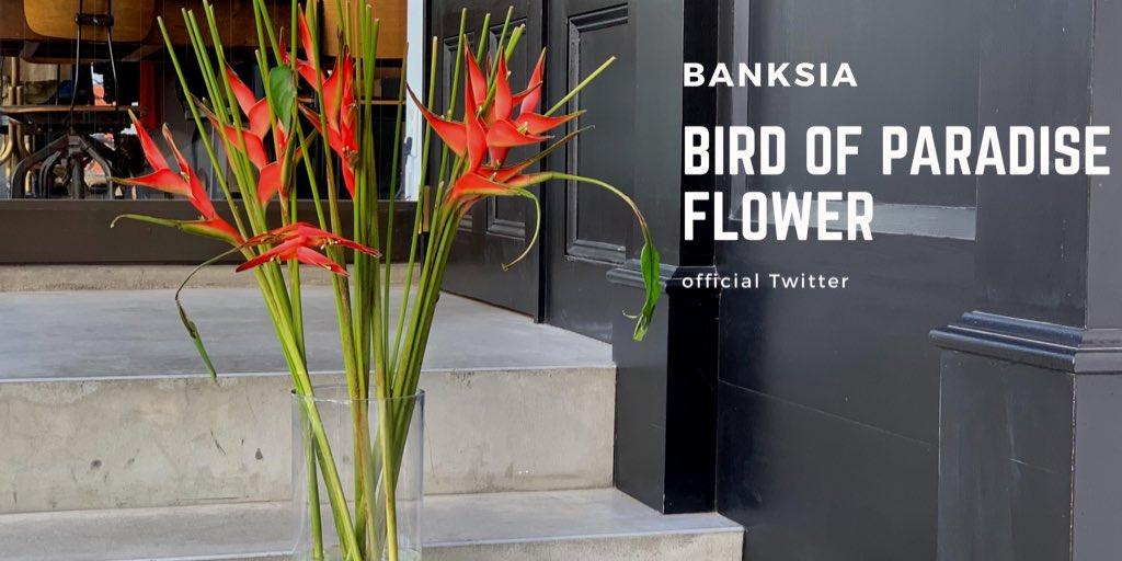 #ウェルカムフラワー  こんにちは、渋谷神南にある大人が通うボブヘア専門店美容室BANKSIAです◎  新しいお花が入ってきました🥀#極楽鳥花  花言葉は、『輝かしい未来』