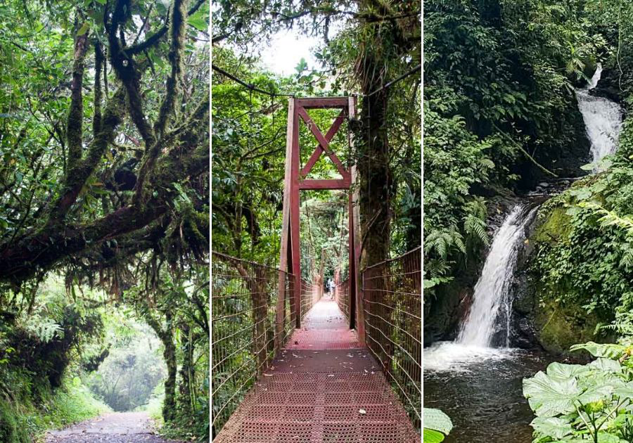 Hiking in Monteverde Cloud Forest Reserve  Read the full article: Cool things to do in Monteverde, Costa Rica ▸ https://bit.ly/2RIjVnW  #CloudForest #Monteverde #Wildlifepic.twitter.com/n4azqN50r1