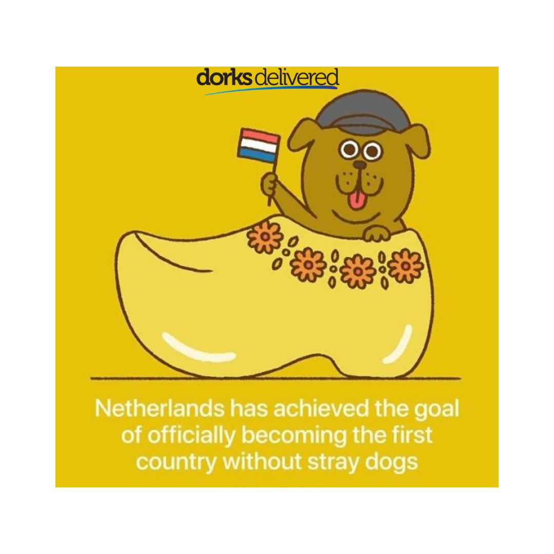 Netherland introduced laws to protect animal welfare :)  #MondayFact #MondayTrivia #DorksTriva #DorksFact #Dorksdelivered #Netherlands #Netherlandslaw #Animallover #Proanimalcare #Proanimalwelfare #Instadogs #Instanature #Naturelover #Dorksanimallover #Nostraydogspic.twitter.com/UrgdjcmFbY