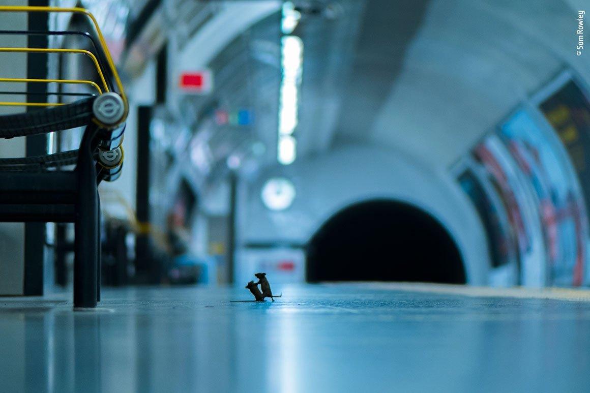 Dope #SamRowley #photography #realmousebrawl #londonsubway