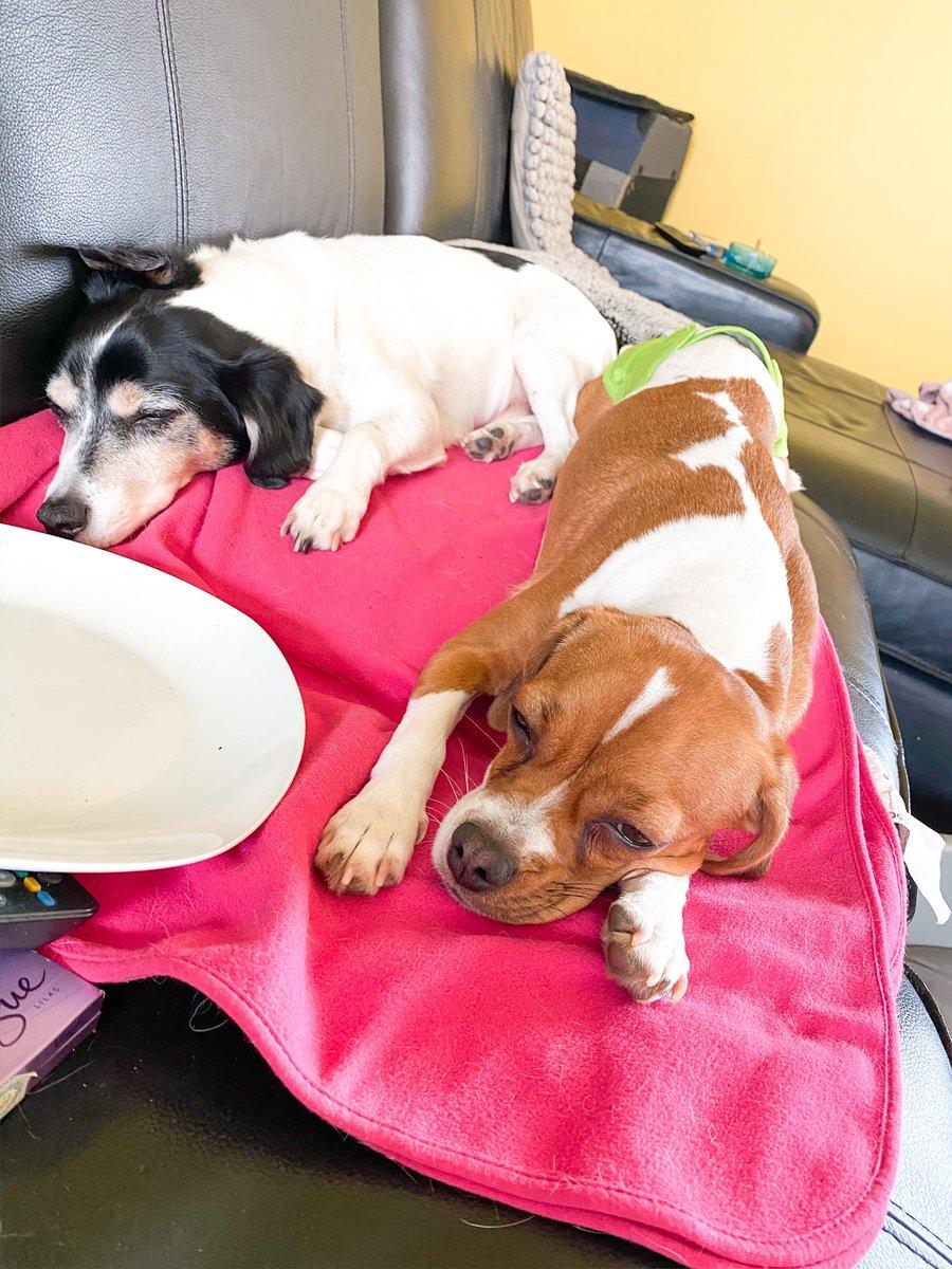 Ne runde schlafen   #hunde #hundeliebe #dogs #hund #dog #dogsofinstagram #hundefotografie #instadog #hundeleben #hundeaufinstagram #dogstagram #doglover #puppy #dogoftheday #doglovers #doglove #hundewelt #hundefreunde #love #hundeblick #ilovemydog #instagram #dogphotographypic.twitter.com/UIqPObTsX2