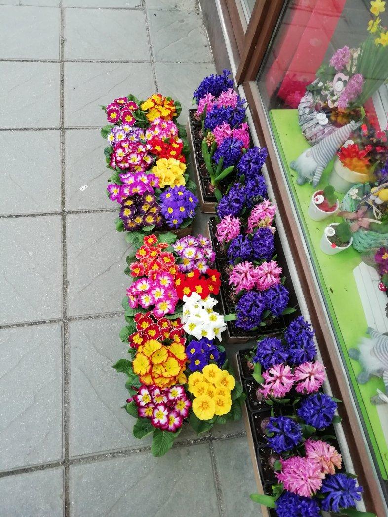 Цветно #цветякрайпътя #photobyme #Sofiapic.twitter.com/F6UTY9Q2sN