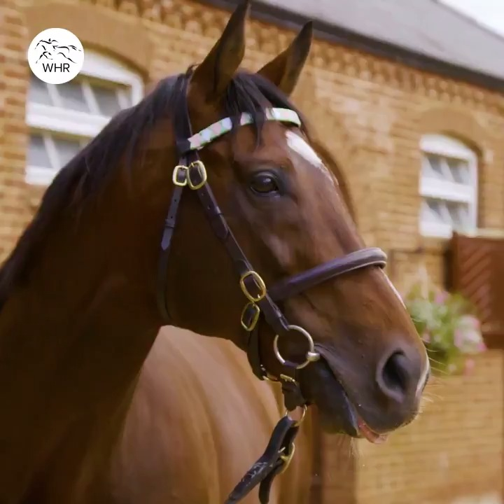 💗 FRANKEL 💚 The best of the best. 🏆 📹 @JuddmonteFarms
