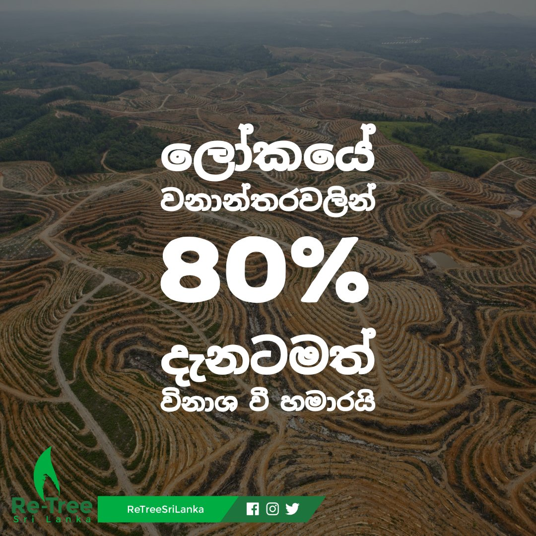 80% of world's forests are already destroyed.  உலகின் காடுகளில் 80 % ஆனவை ஏற்கனவே அழிக்கப்பட்டுவிட்டன.  #deforestation #climatechange #sustainability #environment #nature #globalwarming #savetheplanet #planttrees #biodiversity #pollution #trees #eco #smokefree #mitigation #lka