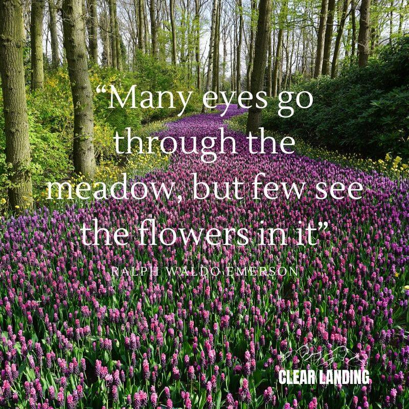 Many eyes go through the meadow, but few see the flowers in it. Ralph Waldo Emerson  #nature #life #meme