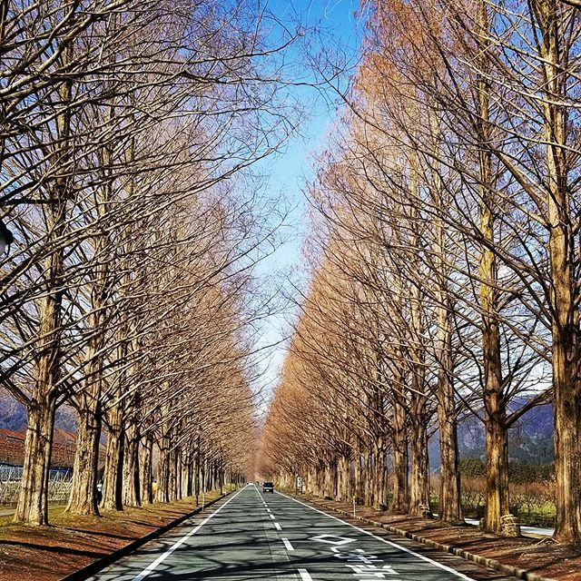 I was driving with my son at northern Shiga prefecture today. #shigaprefecture #metasequoia #travel #traveling #vacation #visiting #instatravel #instago #trip #holiday #travelling #tourism #tourist #instapassport #instatraveling #mytravelgram #travelgram… https://ift.tt/2VgTE3ypic.twitter.com/0hkrb7mfhy