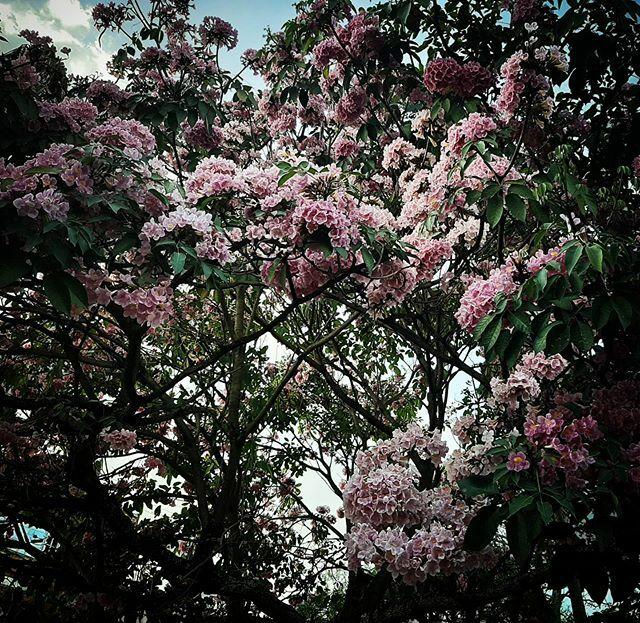 Municipio de Mesitas (Cund) -  #flower #garden #lovely_flowergarden #flor #flores #flowers #colombia #colombianatural #natural #naturaleza #vida #arbol #nature #sky #summer #beautiful #pretty #blue #tree #beauty #light #photooftheday #love #green #skylovers #day #iphonesia #…