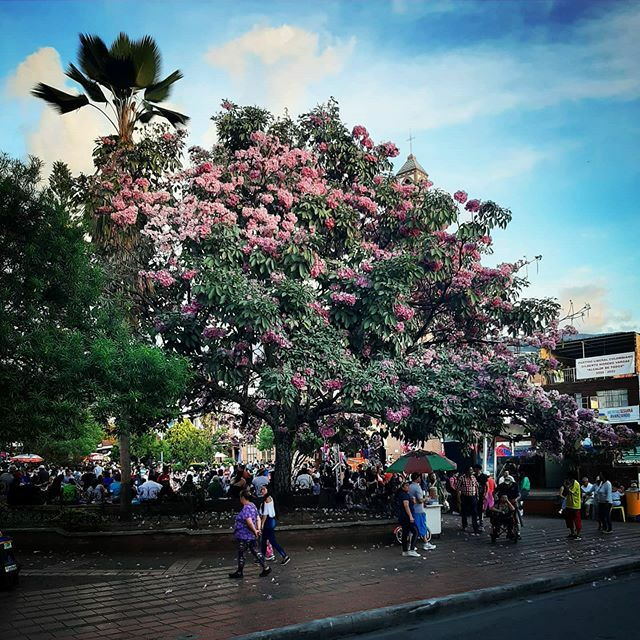 Municipio de Mesitas (Cund) -  #colombia #colombianatural #natural #naturaleza #vida #arbol #nature #sky #summer #beautiful #pretty #blue #tree #beauty #light #photooftheday #love #green #skylovers #day #iphonesia #mothernature