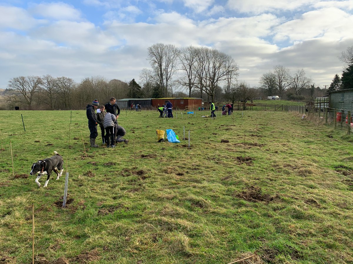 All the rain and flooding has brought  the #climate into focus even more. Planting trees from @WoodlandTrust  a few weeks back with @landscape_trust, Arnside school children and @Arnside_AONB is one way to help create a more #sustainable future!