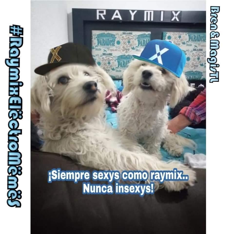 #RaymixElëctrøMëmëS #AdmBren Linda noche superfans 🐕 #dog