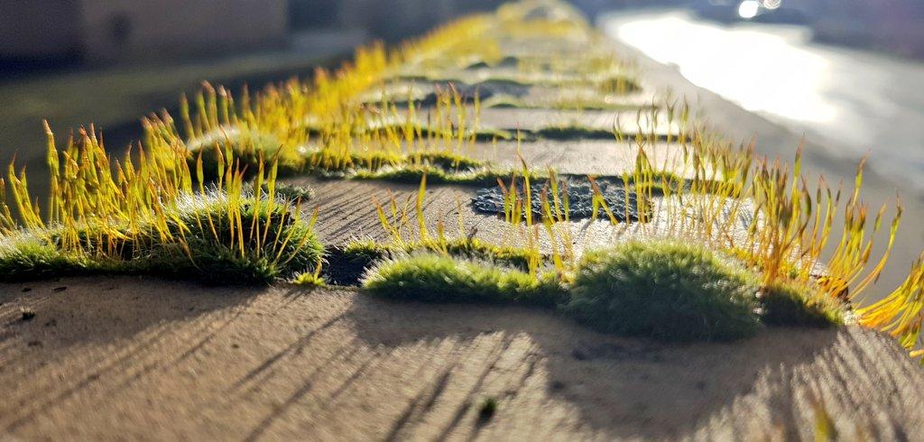 Mauermoos, Licht und Schatten.   #moosmentionpic.twitter.com/qddKoOOczg