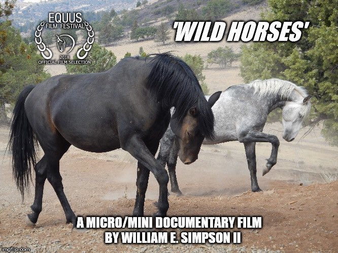 A Cinematic experience carried by an uplifting musical score powering a revealing look into the plight of America's Wild Horses. Screening March 6th at the Tonkawa Film Festival! #TonkawaFilm #filmfestival #officialselection #shortfilmspic.twitter.com/Pk8vy4rFE0
