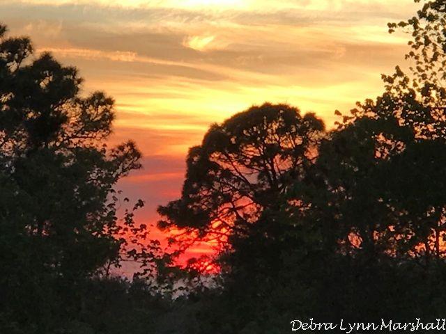 #sunset #Florida #pretty #beautiful #trees #sun #fun #love #nature #photooftheday