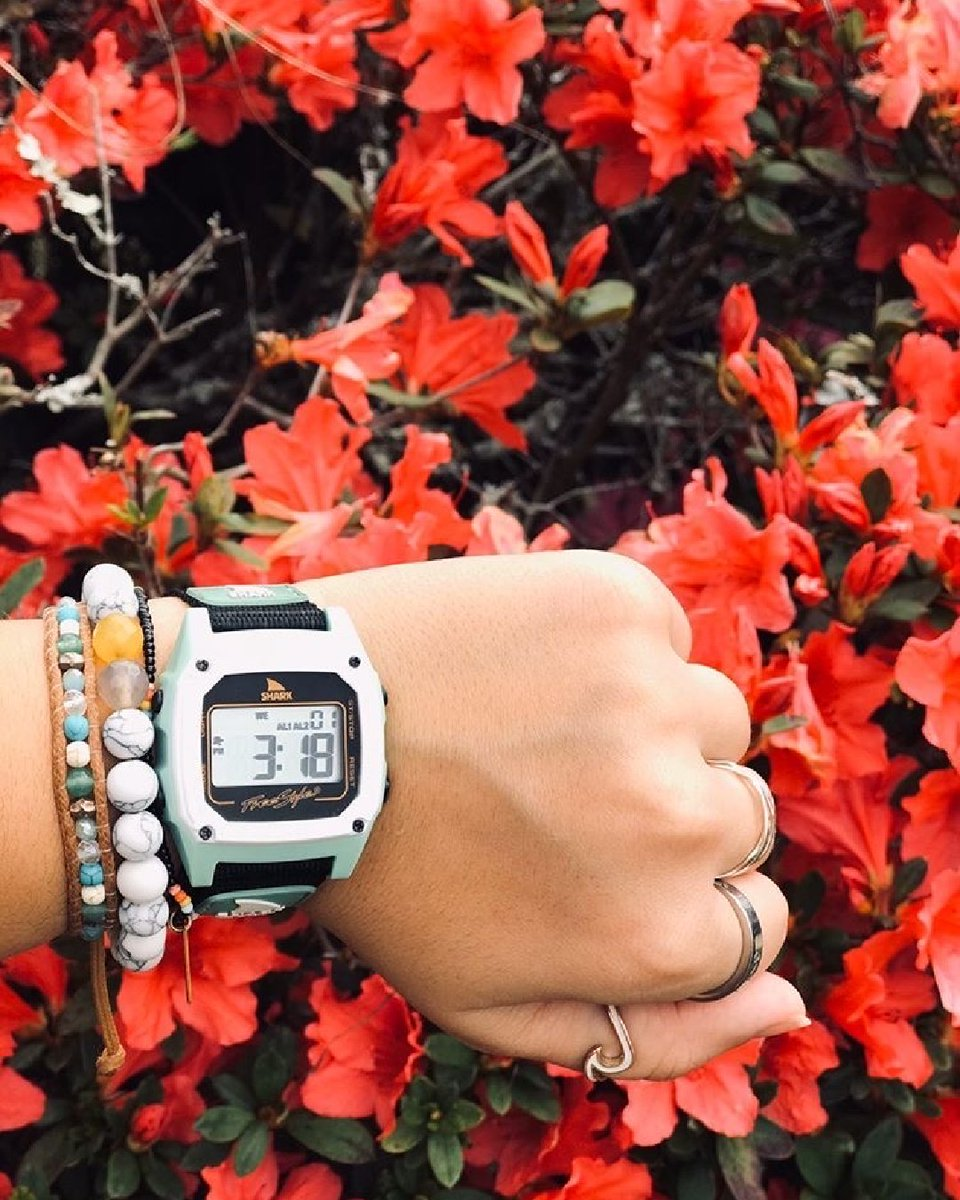 Flower 🌺   Vibes 📷: ​@tanya.marilyn ​Get Sharked and Get Outside! #water #retro  #watches #outdoors #ocean #sun #explore #myfreestylewatch #fun #sea #beachlife #swim #surfFreestylewatches #adventure  #surf #surfing #beachday #sharks #shark  #sunshine #beach #swim