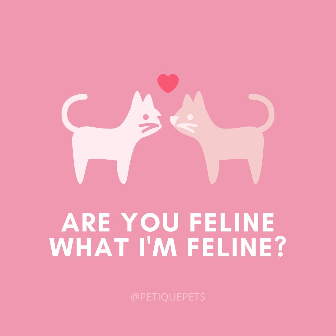 When I'm with you, I'm FELINE good and really PURR-retty 😊 ___ #petique #motivationmonday #cats #vday #valentines