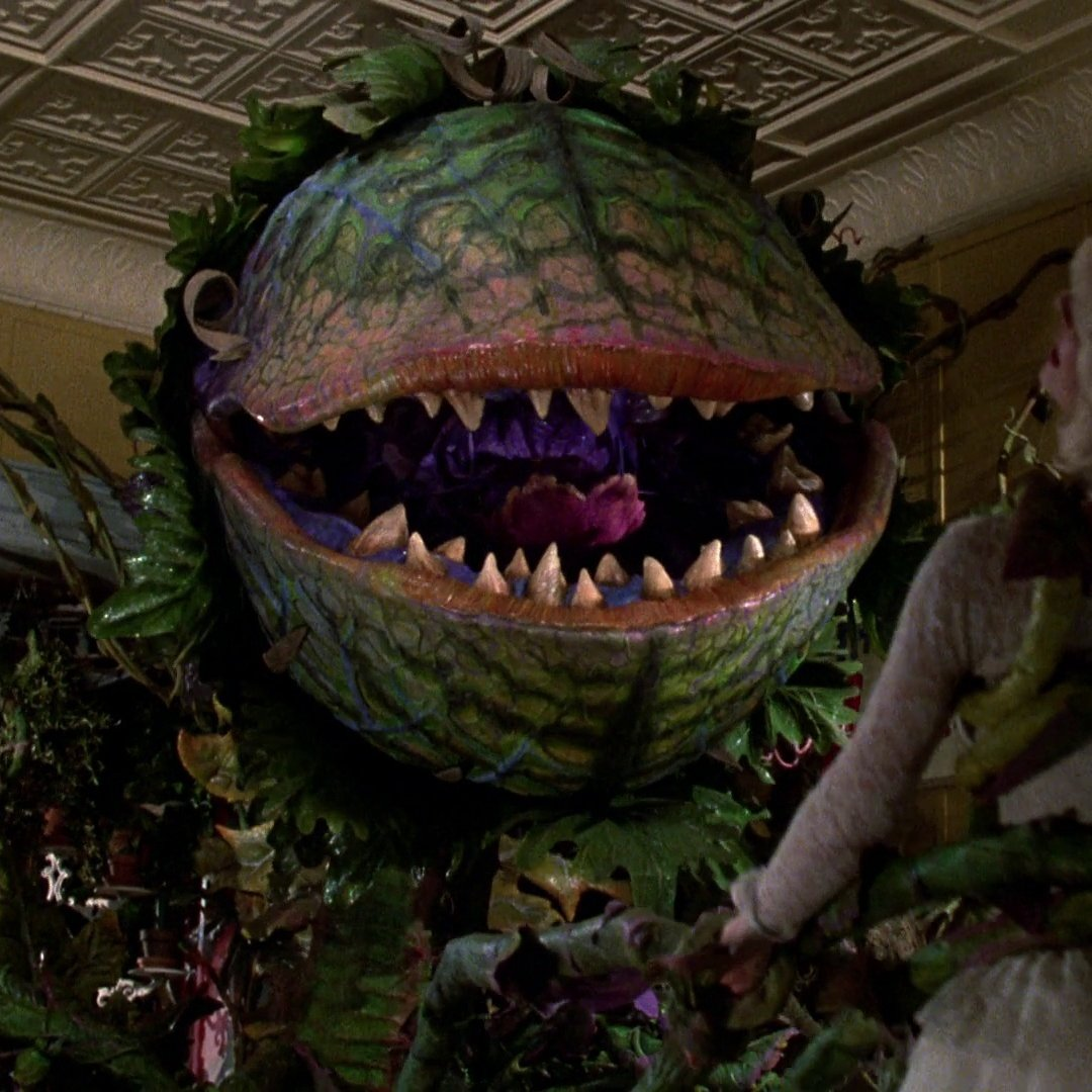 Chris Evans in talks to star in 'Little Shop of Horrors' as dentist Orin Scrivello  Taron Egerton and Scarlett Johansson also in talks to lead the cast as Seymour and Audrey with Billy Porter confirmed as the carnivorous plant Audrey II🌱  (via @THR | )