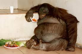 MonkeyMorning photo