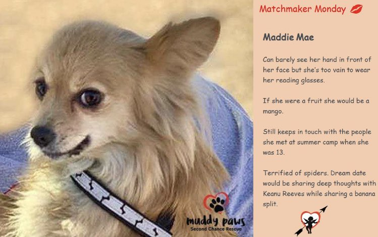 Let's spice this Monday up with Maddie Mae & Tess!! To learn more about this ladies link in bio! #AdoptDontShop