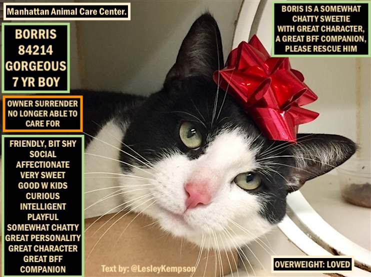 BORIS MUST BE SAVED BY 12 PM NY TIME FEB 25 GORGEOUS 7 YR BOY-O/S-NO LONGER ABLE TO CARE FOR FRIENDLY, BIT SHY SOCIAL AFFECTIONATE VERY SWEET GOOD W KIDS CURIOUS INTELLIGENT PLAYFUL SOMEWHAT CHATTY GREAT PERSONALITY GREAT CHARACTER GREAT BFF COMPANION https://www.facebook.com/ACC.OfficialAtRiskAnimals/photos/a.651025165439018/651026562105545/?type=3&theater…pic.twitter.com/3Sc5ODNHqE