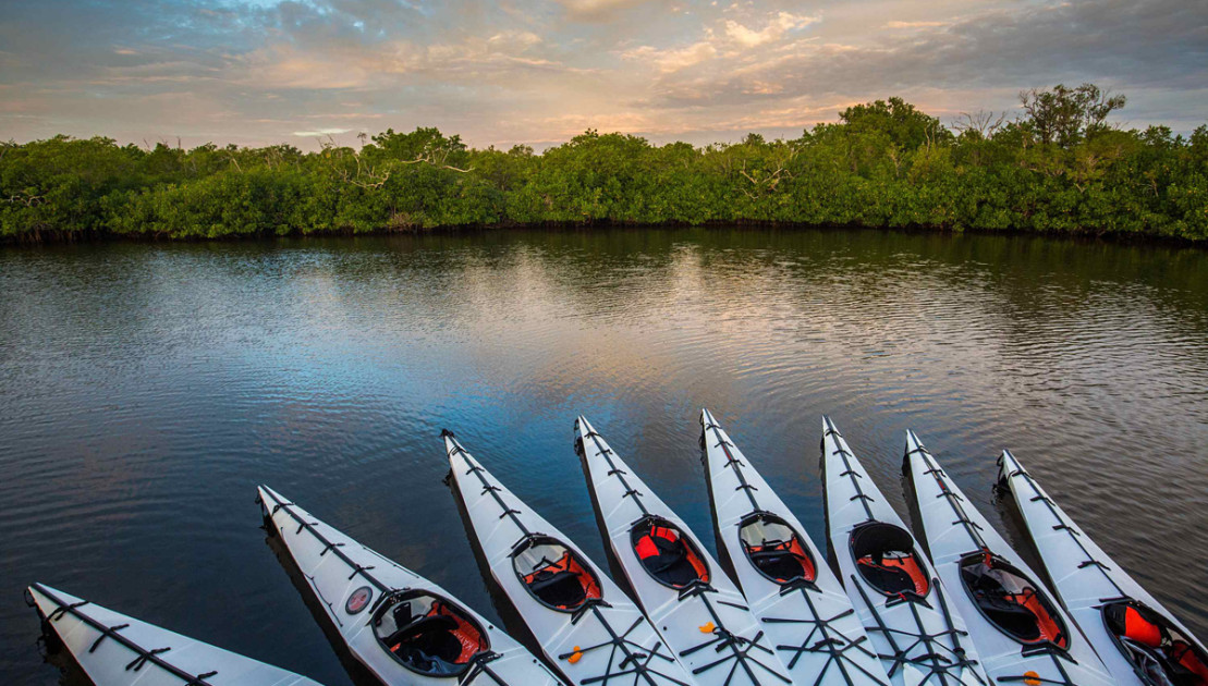 The Ultimate Guide to Exploring the Everglades by Kayak http://dlvr.it/RQgm8m  #Adventure #adventuretravel #kayaking @watsonbrookes RTpic.twitter.com/3i4YCnJJDY