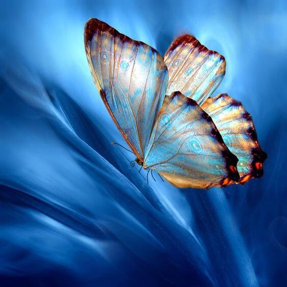 Blue World by Josep Sumalla • 💙🦋 🦋💙 •  There is a blessing in the air. — William Wordsworth  #blessings  #williamwordsworth  #photography  #butterfly  #blue #art #Namaste  #Om  🙏🏼💙🦋