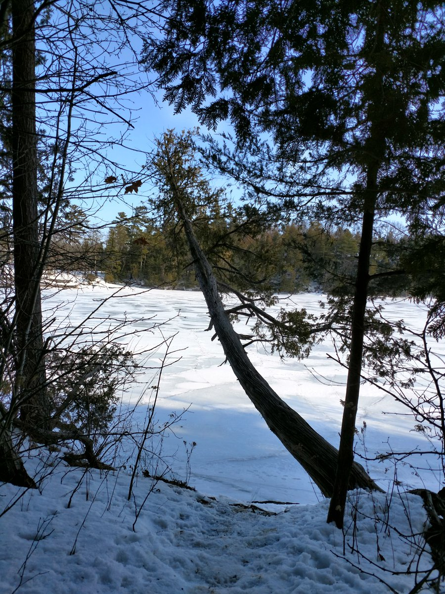 I went for a winter walk with hubby this weekend. #outdoors #walk #winter #winterfun #greatoutdoors #nature #walkingtrail #togetherness #exercise