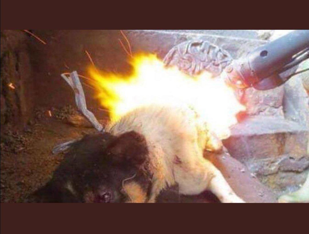 Sie zeigen so schön öffentlich, wie ignorant sie sind. Natürlich gibt es in China tierliebe Menschen. Die Mehrheit ist gegen den Hunde und Katzenfleischhandel. Wenn man China schreibt, meint man das Regime und die Autonomen Regionen, die Hunde und Katzen foltern. pic.twitter.com/SfF8janTv5