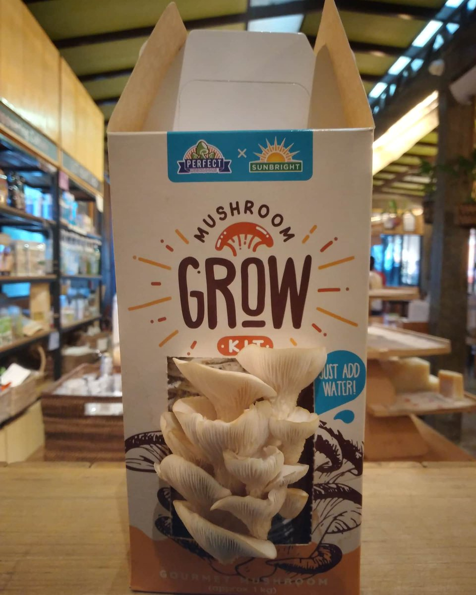 Grow your own mushrooms in your home with this mushroom grow kit from Perfect Mushrooms!   #gotheart #gotheartshop #mushroomkit #vegan #socialenterprise