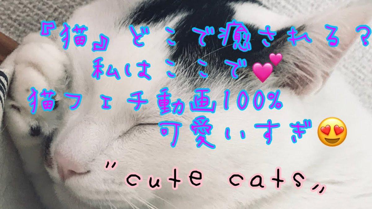 《#Cute CATS》癒しの猫動画Japanese #Cat ...   #Cats #Cat #Kittens #Kitten #Kitty #Pets #Pet #Meow #Moe #CuteCats #CuteCat #CuteKittens #CuteKitten #MeowMoe   #CuteCatsVideos #CuteKittensVideos #CuteKittiesVideos #CuteMeowVideos #KrotjGSjlRU   https://www.meowmoe.com/585955/%e3%80%8acute-cats%e3%80%8b%e7%99%92%e3%81%97%e3%81%ae%e7%8c%ab%e5%8b%95%e7%94%bbjapanese-cat-life/…   .