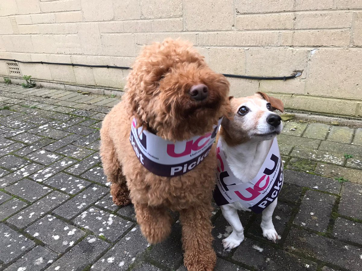 Solidarity! #UCUStrike #UCUStrikesBack #dogsonpicketlines