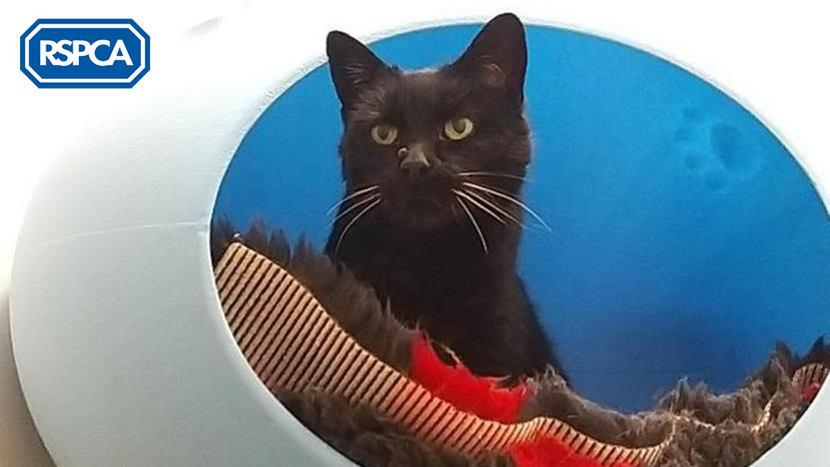 🥞💖It wouldn't be #PancakeDay without Treacle!💖🥞 This #GoldenOldie came into our care as a stray and is sweeter than treacle itself, she's a firm favourite with our staff and loves nothing more than snuggles. Can you offer Treacle a home? #FindEachOther