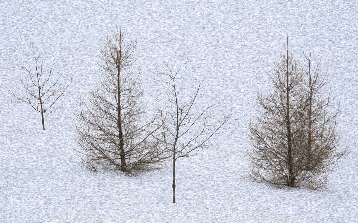 Winter beauties ❤️ #yeg #trees #winter #snow #paintings #canada #mothernature #Edmonton #alberta #PhotoOfTheDay #beautiful