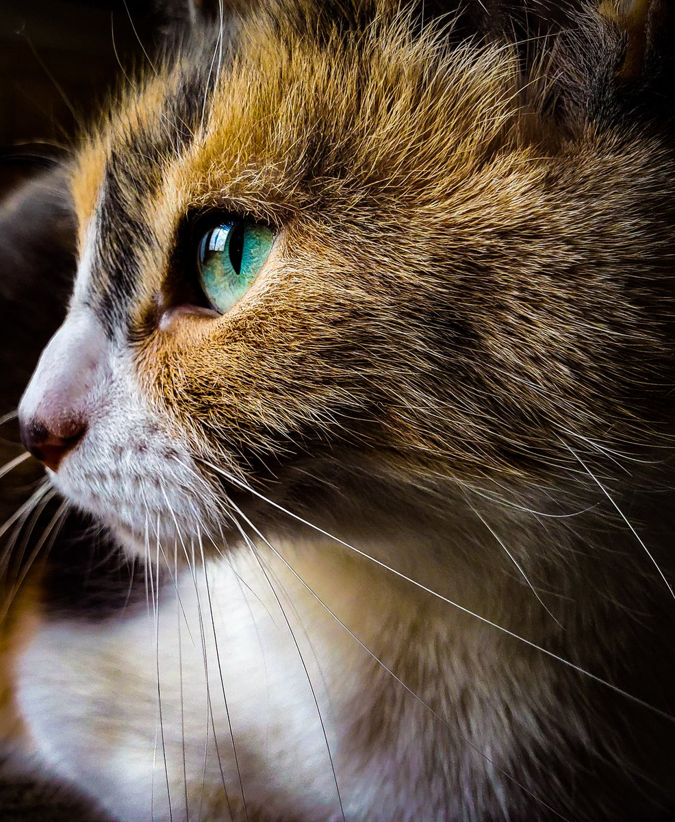 """""""Patches""""  #cat #photography"""