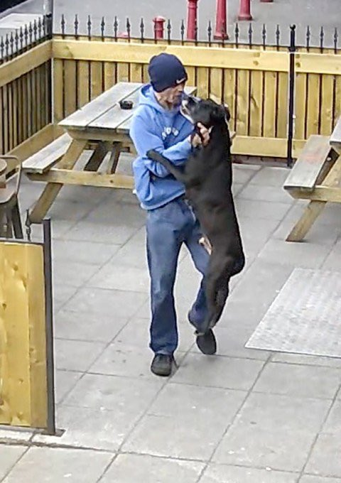 Find scumbag filmed repeatedly punching dog in the face Jamie Hill, 40, from Bournemouth in Dorset Anyone with any information please contact Dorset Police metro.co.uk/2020/02/25/fin…