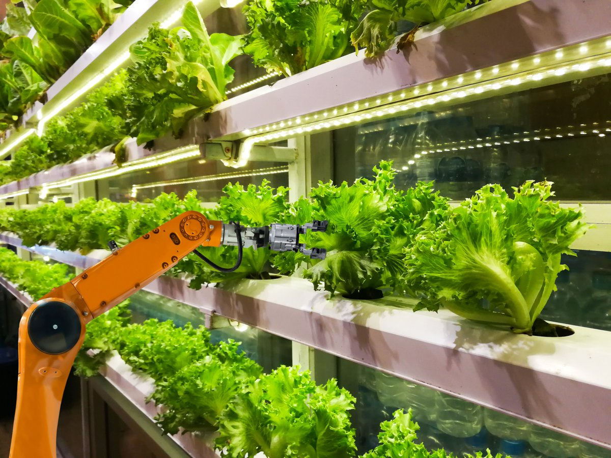 #QuestionOfTheWeek  Do you think that #VerticalFarming  can save #agriculture  and feed the #world ? More about this topic during the #Workshop  with Michał Jasiorowski. JOIN US on Thursday! 👍