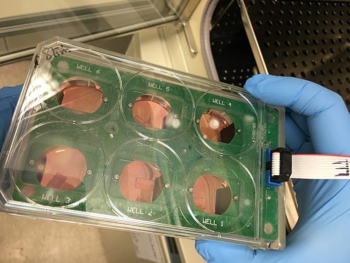 #TechnologyTuesday: The use of human #heart tissue in #cardiovascular research is essential, but its viability diminishes within 24 hours. In response, #UofL researchers have created optimal cell conditions that extend the viability to seven days. https://buff.ly/2TfOvpHpic.twitter.com/p8OeBlFgGI