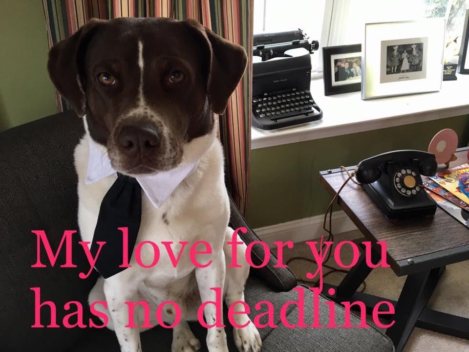 Editor dog on duty