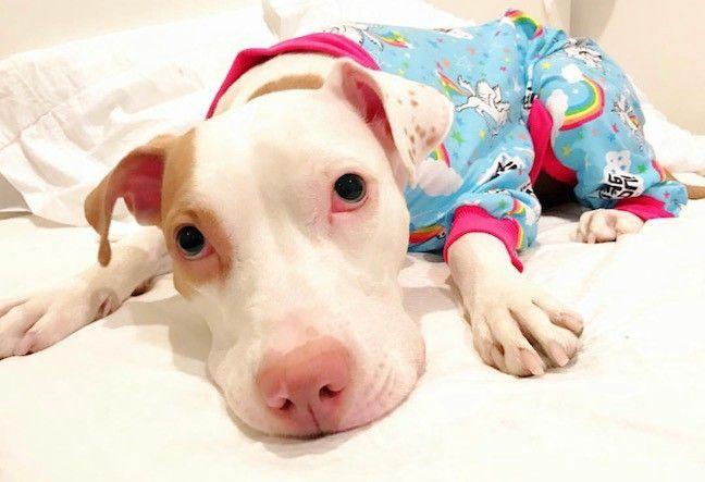 Predicting Shelter Dog Outcomes - Michael Kroog - Medium