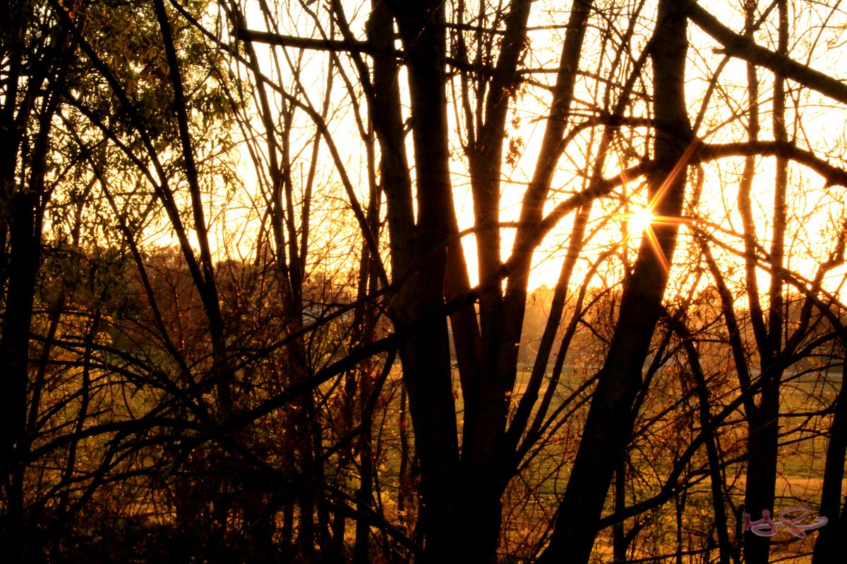 Seeing the sun between the trees.  #sunset #trees #nature #love #beautiful #photography #picsbymichael