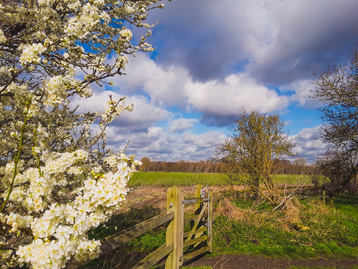 Spring around the corner, a pic from Holme, Cambridgeshire today as an entry to #ballsphotospic.twitter.com/S5DjuVogiE