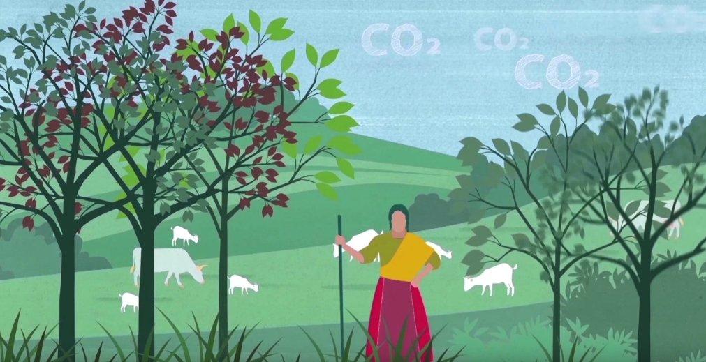 La #AgriculturaClimáticamenteIinteligente tiene 3 objetivos principales: aumento sostenible de la productividad e ingresos agrícolas, adaptación y creación de resiliencia ante el #cambioclimático y reducción y/o absorción de gases de efecto invernadero   http://bit.ly/2Fd1uA2pic.twitter.com/cg61jWfthw