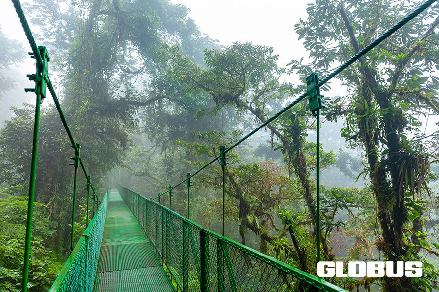 Take a walk in the clouds ... Monteverde's Cloud Forest is spectacular! Who wants to go? @globusfamily  . #globus #monteverde #cloudforest #travelpicoftheday #GoMASTpic.twitter.com/NWCI7keH7L