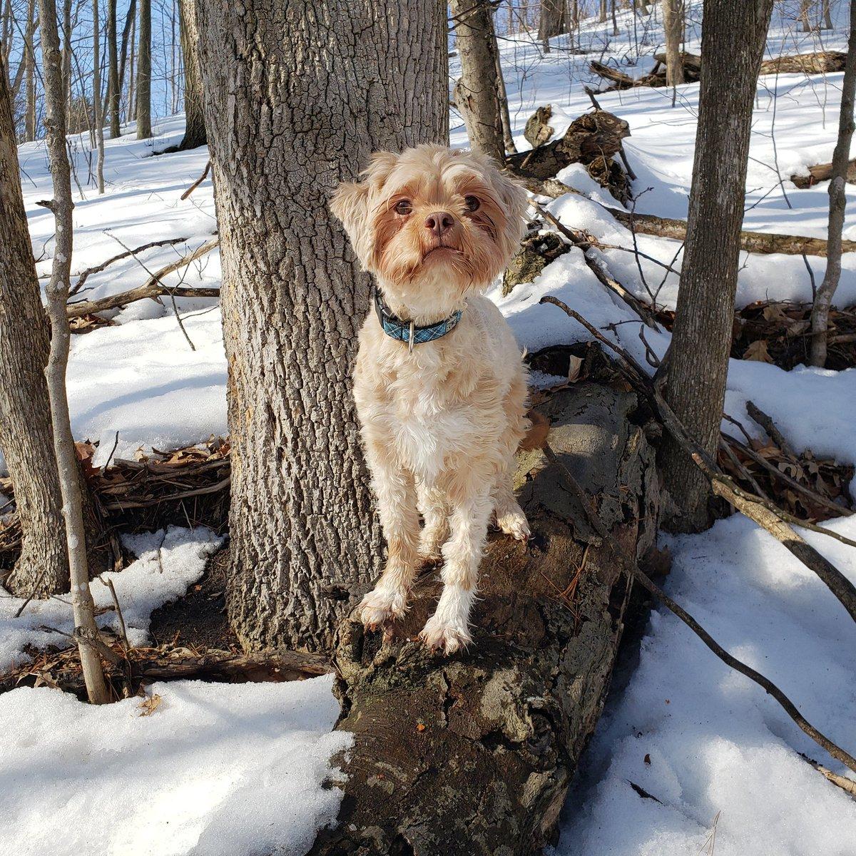 Joey's #enjoyingwinter #muppetdog #winter #winterdog #doginthesnow #cutedog #uglydog #sittingdog #dogphoto #dog #doggo #doggy #dogadventures #dogslifepic.twitter.com/kmddBCvGsP
