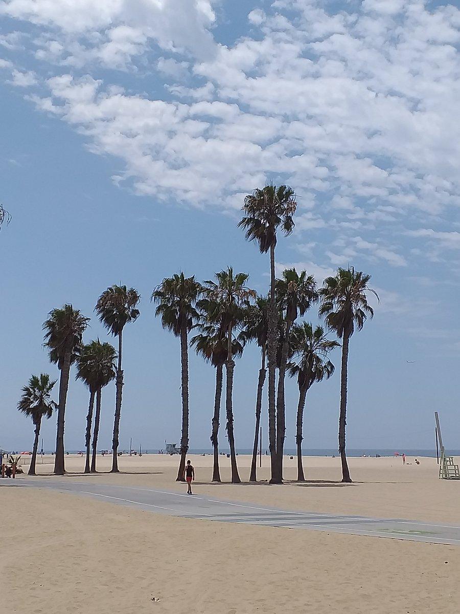 (Werbung unbezahlt)  Ich liebe den Blick auf Palmen!  * (Advertising unpaid) I love the view of Palms! #reisen #travel #vacation #urlaub #reiselust #reisefieber#photooftheday #küste #coast #ozean #meer #ocean  ##beach #beachday #venicebeach #santamonica #strand #losangelespic.twitter.com/TfaJGmaQzB
