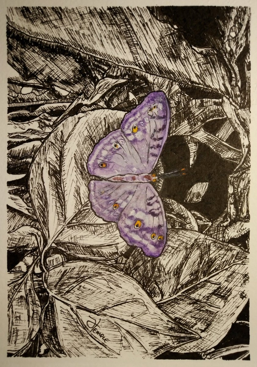 Day No.24 of the 100 artworks challenge. Possibly a white peacock butterfly, caught under the glow of a purple light from the butterfly enclosure at @HornimanMuseum  #penandink #drawing #bold #guache #butterfly #London #museum #100days100artworks #butterflyart #purplebutterfly