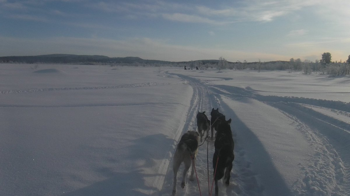A selection of the best #husky #expedition #photos from #sweden last week - http://mountain-lifestyle.blogspot.com/2020/02/husky-sledding-expedition-images-kiruna.html?m=1 …