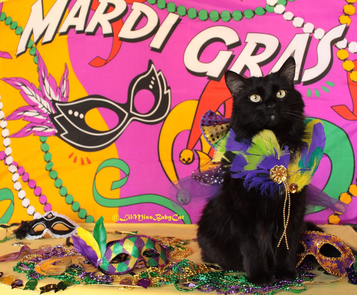 #HappyMardiGras Y'all! Hope you're #Pawtying with extra treaties(maybe even a #paczki ?)  today because it's #FatTuesday! #LaissezLesBonsTempsRouler !! #LilMissBabycat  #Carnival #MardiGras2020  #FatTuesday #NOLA  #buzzfeedanimals #blackcat #parade #AdoptDontShoppic.twitter.com/RAHDXCvhED