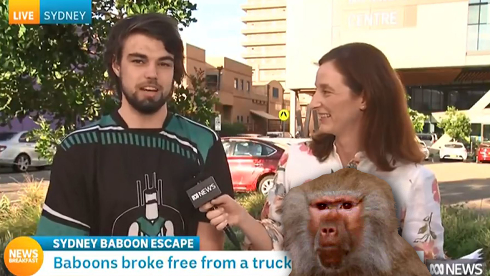 """We caught up with Cody the """"hoping to catch a baboon"""" guy ab.co/2HTnC5F"""